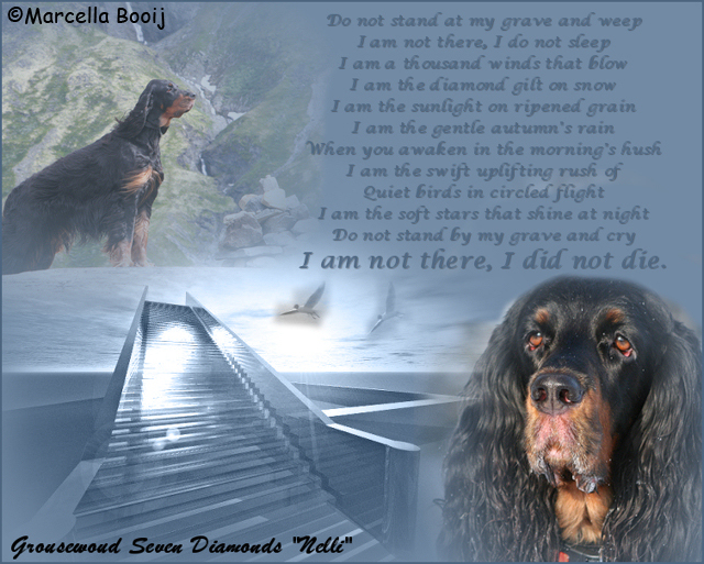 "Grousewood Seven Diamonds ""Nelli"" rainbow bridge"